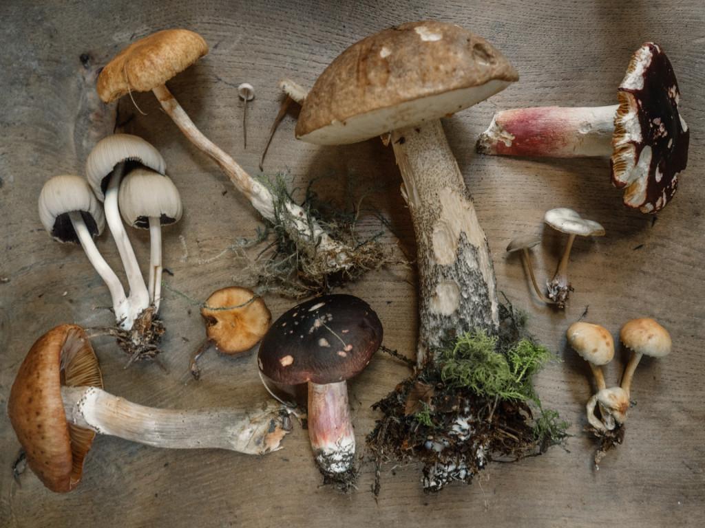 tipologie di funghi