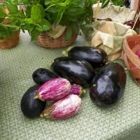 eggplant-445427_1280