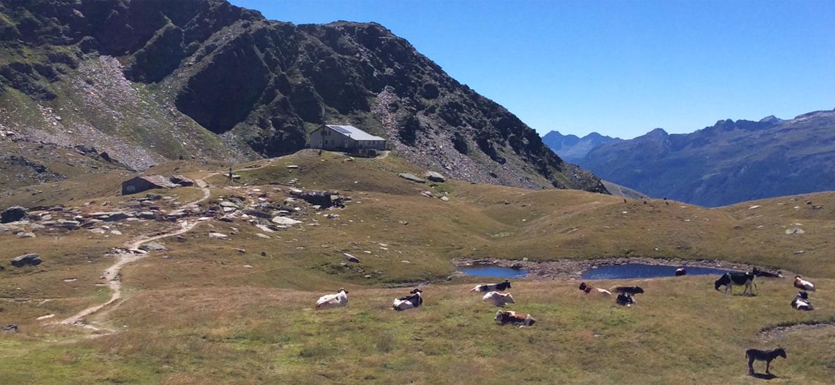 Il Rifugio Bertacchi e il suo sentiero che alcuni coraggiosi percorrono in mountain bike