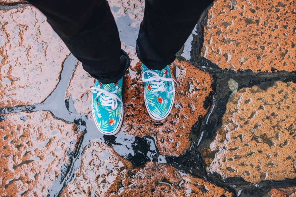 Vans - Palms collection