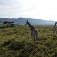 5 motivi per cui visitare il Sudafrica