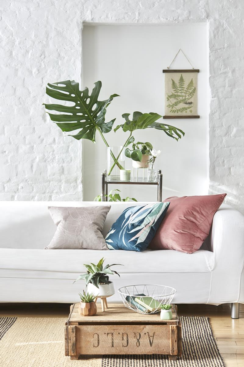 primark casa botanica