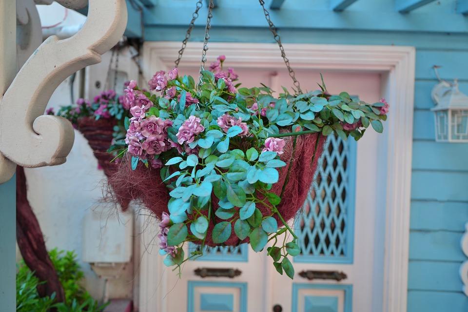 Flower Plant Flowerpot Nature Garden Decoration