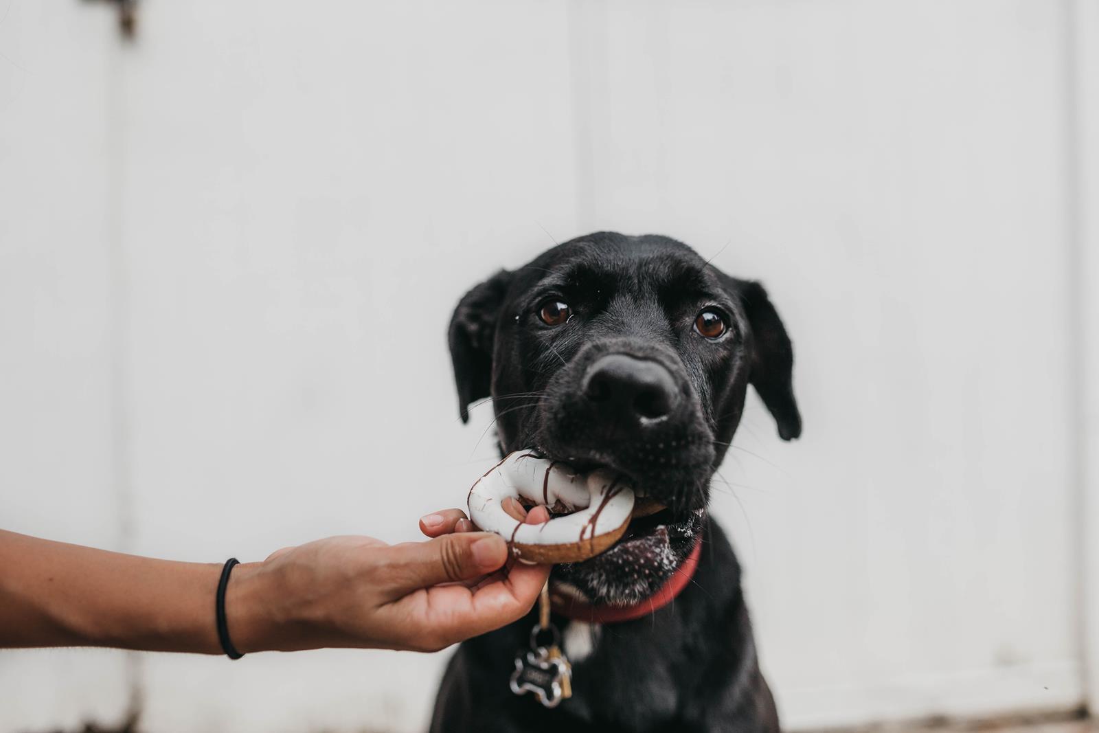 dieta per cani - cosa può mangiaere un cane e cosa è percioloso per un cane