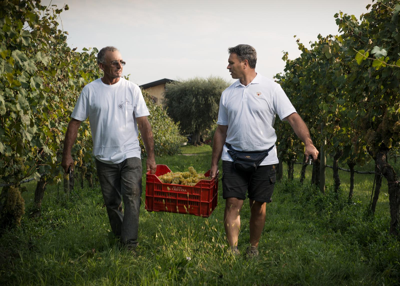 zenato azienda vitivinicola wine experience valpolicella classico e lugana originale