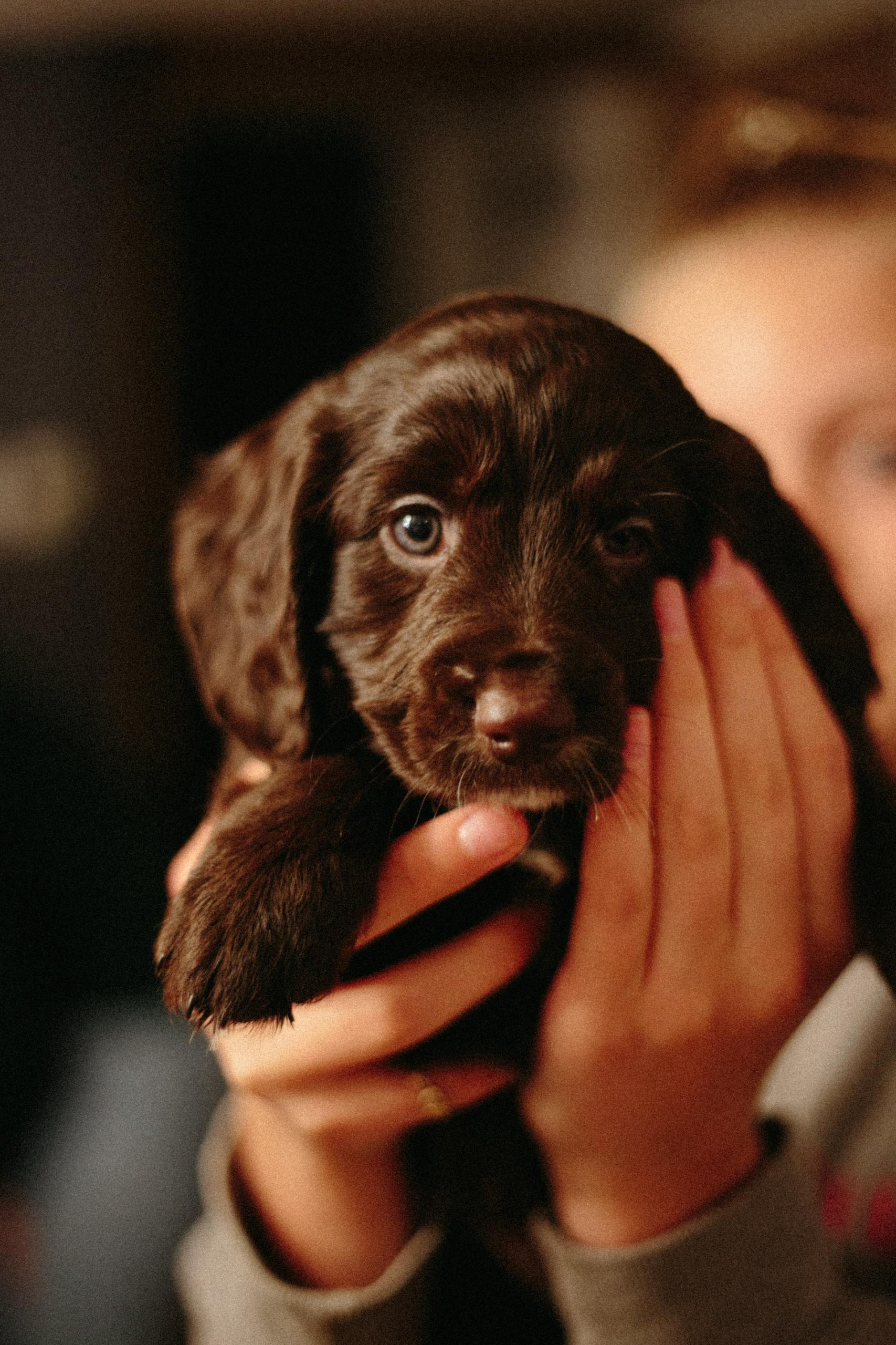 cucciolo di cani