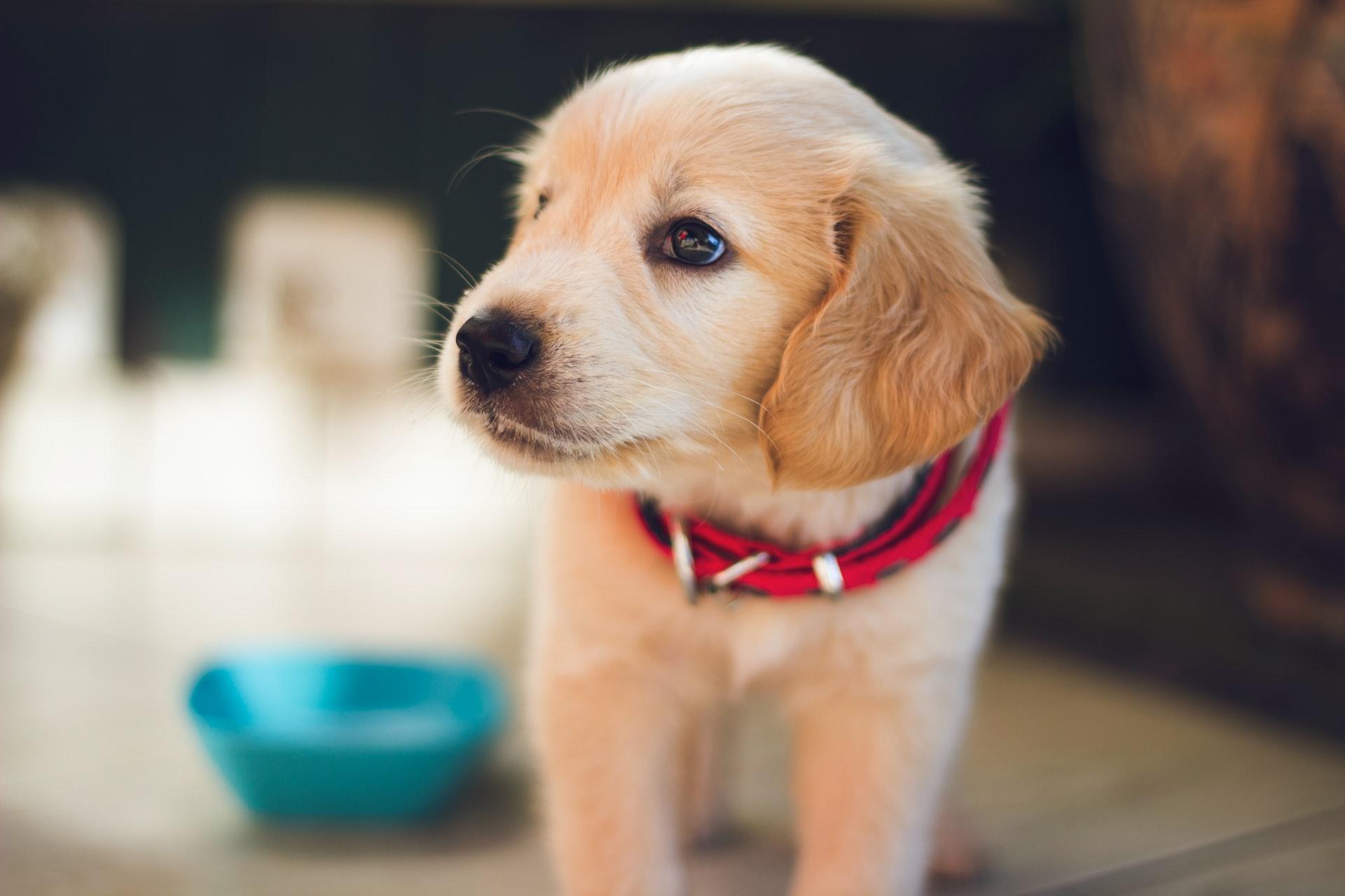 regala cuccioli